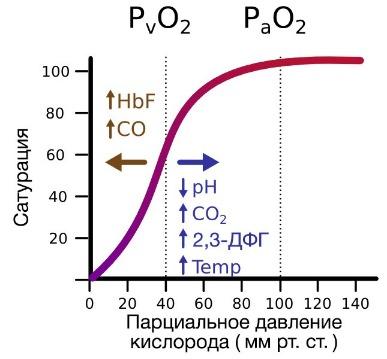 В легких гемоглобин присоединяет кислород и переходит в
